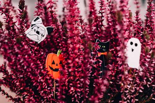 organizzare una festa di halloween decorazioni